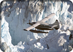 Glacier Flightseeing via Floatplane