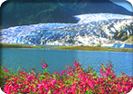 Alaska Sightseeing Package