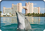 Atlantis Shallow Water Dolphin Interaction