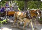 Acadia Carriage Ride & Cadillac Mountain