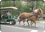 Halifax Horse-Drawn Trolley