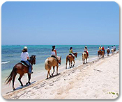 Honey Suckle Beach Trail Ride