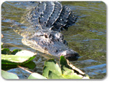 The Real Florida Airboat Adventure with Airport Transfer