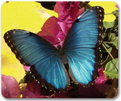 Butterfly Farm & Marigot
