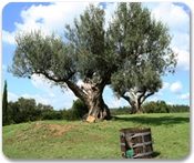 Olive Oil Tasting & Scenic Drive