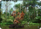 Tropical Botanical Garden Tour