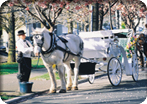 Victoria By Horse Drawn Trolley