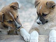 Dog Sled Summer Camp