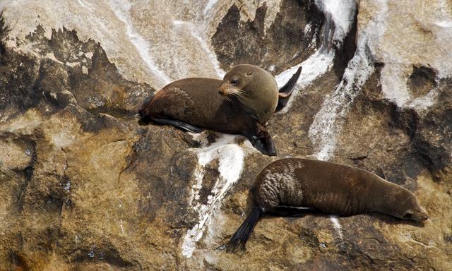 Bay of Islands Wildlife Cruise