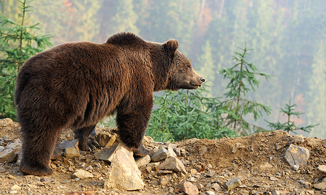 Wildlife Safari & Bear Viewing