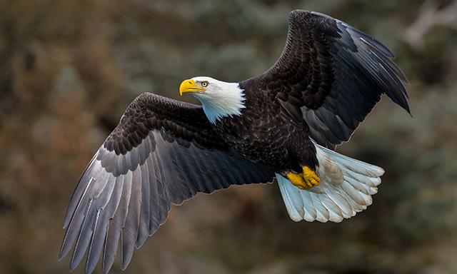 Exclusive Guided Tour of Bald Eagle Foundation