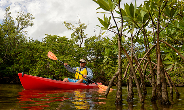 Mangrove Kayak Eco-Adventure