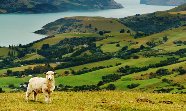 Akaroa Peninsula Farm Tour