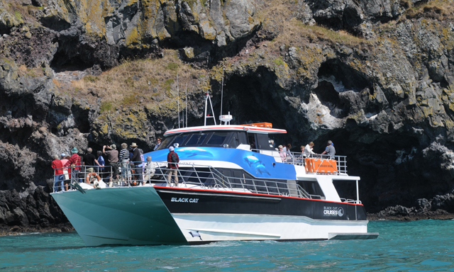 Akaroa Harbour and Wildlife Cruise