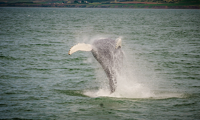 Whale Watching Safari