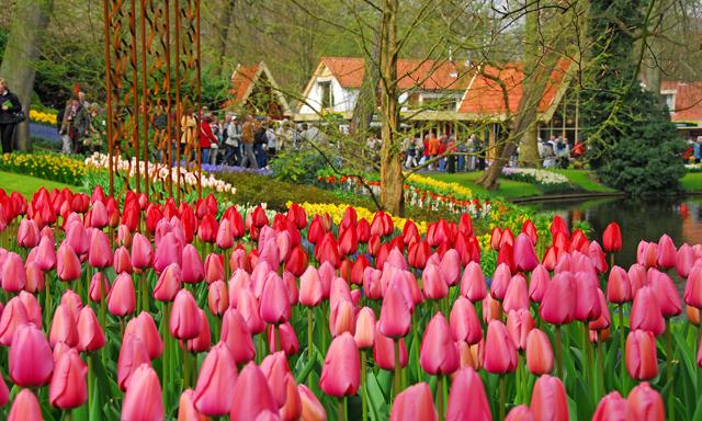 Keukenhof Festival of Tulips