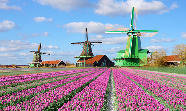 Picturesque Zaanse Schans and Airport Drop-Off (AMS)