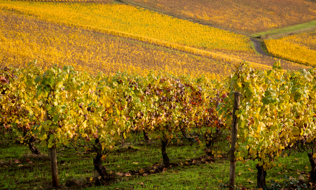 Willamette Valley Wine
