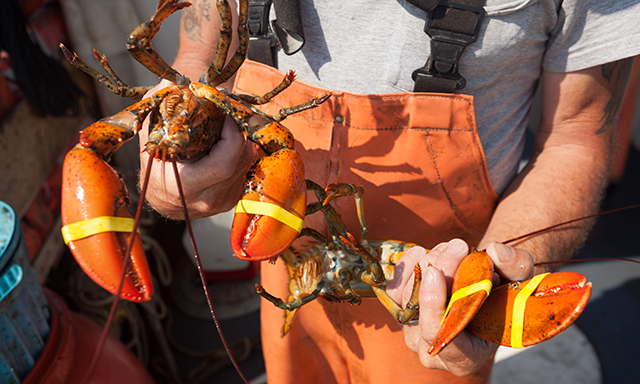 Lobster Fishing and Feast