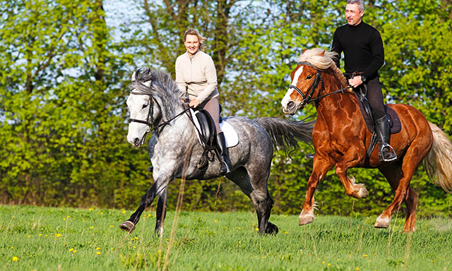 Forest and Surf Coast Horse Trekking