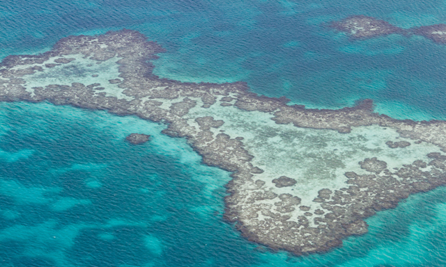 Turneffe Atoll 2 Tank Scuba Dive with Equipment
