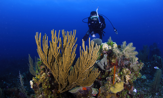Turneffe Atoll Certified 2-Tank Scuba Dive without equipment