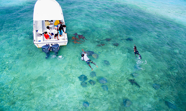 Sharks, Rays, Barrier Reef Snorkel & Island Escape