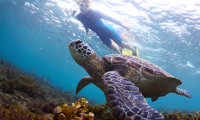 Barrier Reef Snorkel and Island Getaway Featuring National Geographic Snorkeler