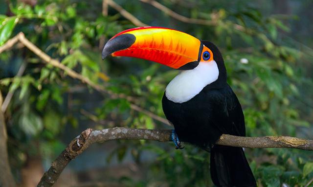 Belize Zoo & Kukumba Beach Day
