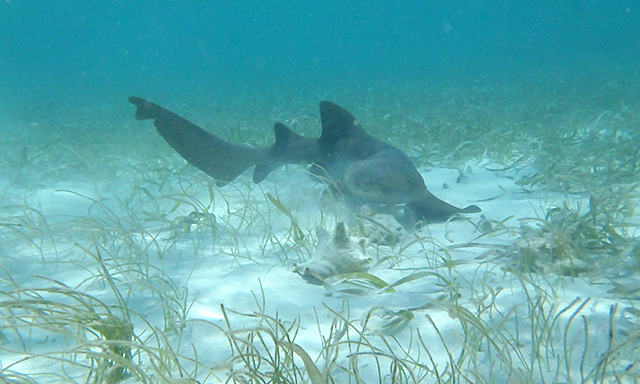 Sharks, Rays, Barrier Reef Snorkel & Island Escape