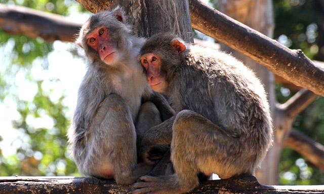Wildlife in Beppu