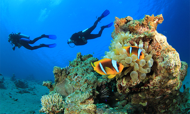 Diving in Bodrum