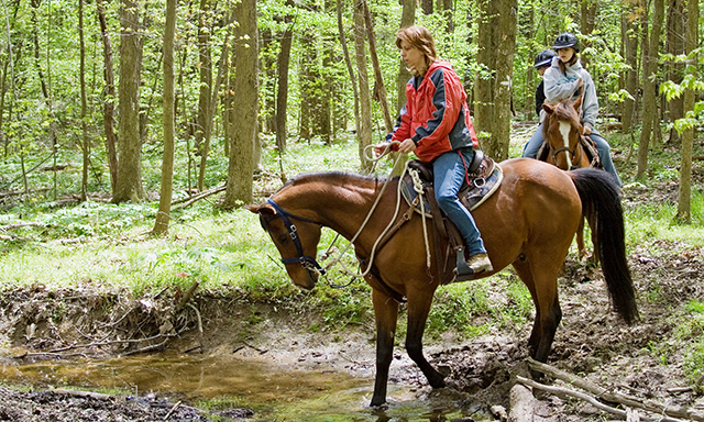 Horse Riding in the Rainforest