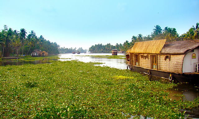Backwaters of Alappuzha by Houseboat
