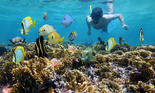 Snorkel Adventure and Underwater Treasure Hunt