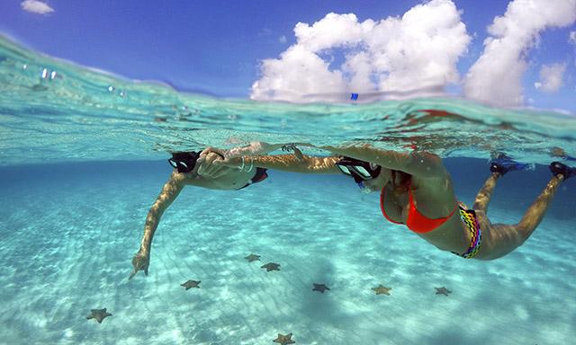 Starfish Sanctuary & Palancar Reef Snorkel