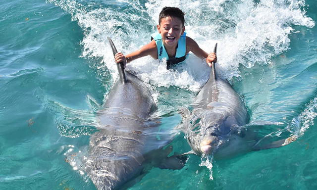 Swim with a Pair of Dolphins, Lunch & Beach