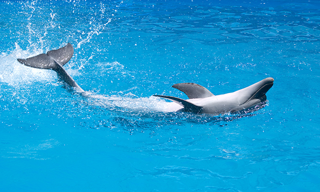 A Special Dolphin Swim and Shopping