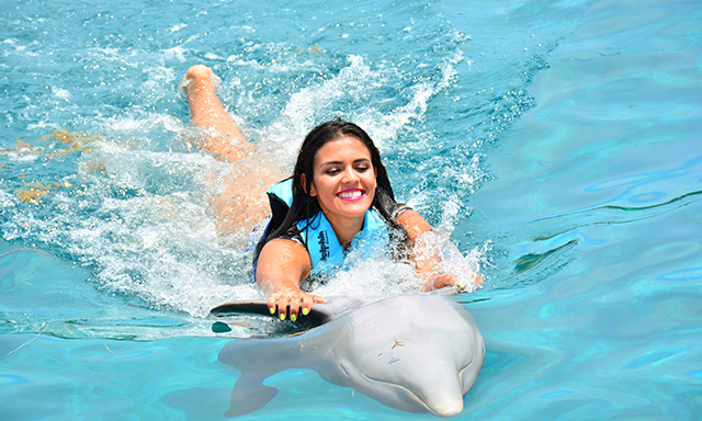 Dolphin Push, Pull & Swim with Lunch and Beach Break