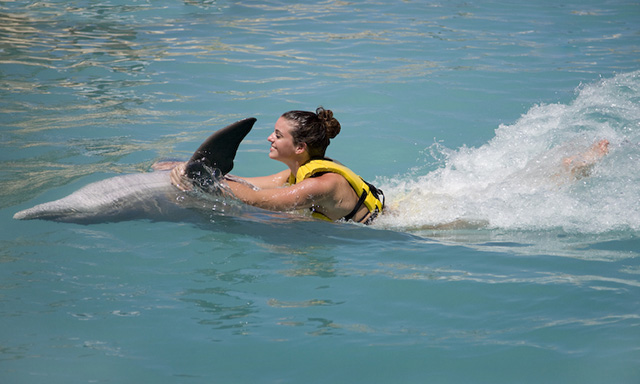 All Inclusive Dolphin Swim and Ride