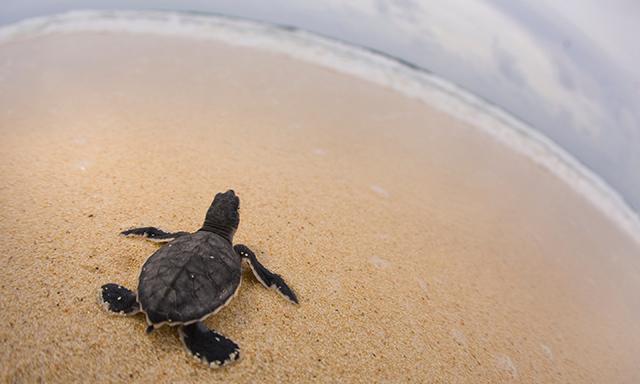 Save a Sea Turtle Experience