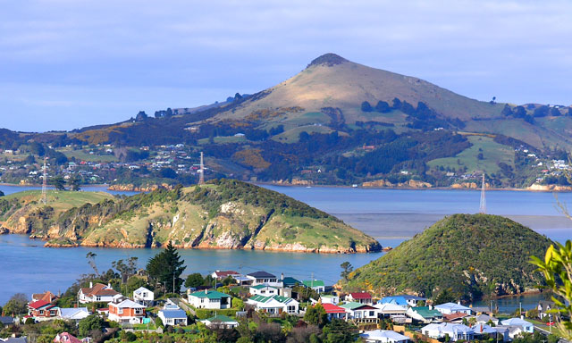 Otago Harbor Wildlife Cruise