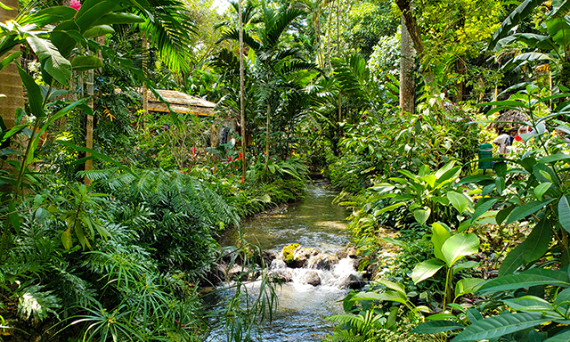 Accessible Jamaica, Flora, Fauna and Falls