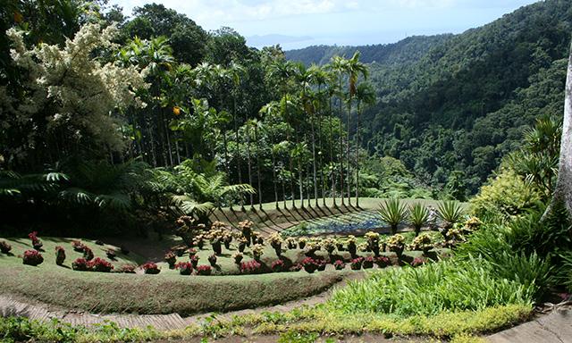Botanical Garden with Suspension Bridge