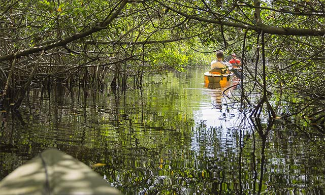 Kayaking Mangroves Adventure