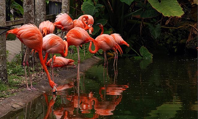 Flamingo Gardens and Wildlife Sanctuary Park - FLL