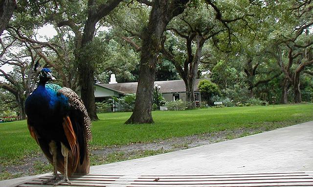 Flamingo Gardens and Wildlife Sanctuary Park - MIA