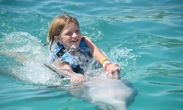 Dolphin Swim and Stingray City