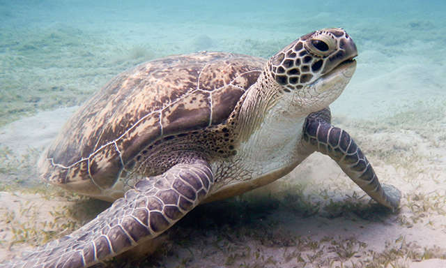 Accessible Scenic Grand Cayman and Turtle Farm