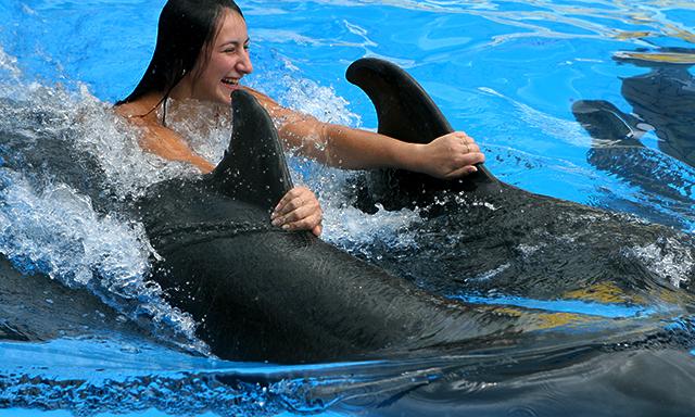 Dolphin Push, Pull & Swim Experience